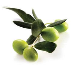 mediterranean-diet-olive-oil